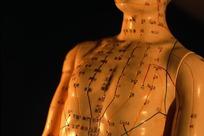 画着经脉穴位图的人体模型的胸部特写