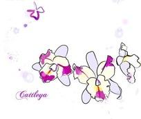 手绘美丽的花朵线稿插画