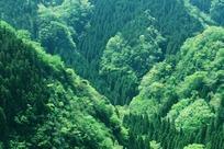 勃勃_生机勃勃的绿色森林