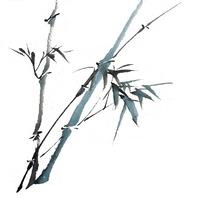 画竹子 图片