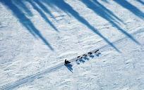 雪地上的狗拉雪橇