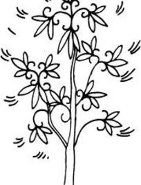 中国古典图案-卷曲纹和卵形叶子构成的树木图片