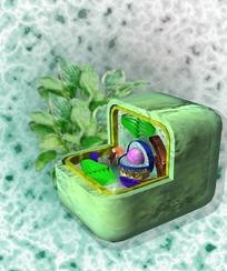 绿色植物的方形细胞内部结构图