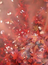 梦幻的秋季枫叶
