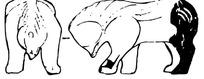 中国古典元素的熊