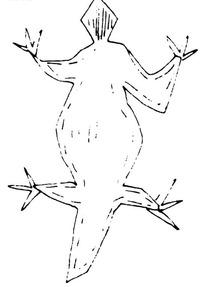 简单线条画-张开四肢的短尾尖头动物