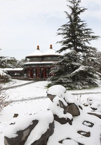 雪后的亭子和雪松
