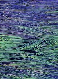 绿色紫色草穗合拼图片