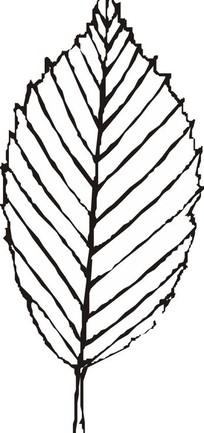 手绘树叶线描
