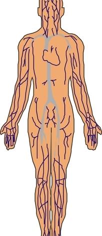 手绘女性内部的生殖器官矢量图