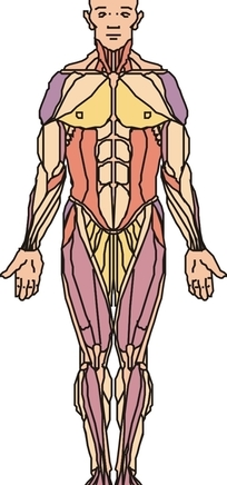 女性盆腔结构示意图