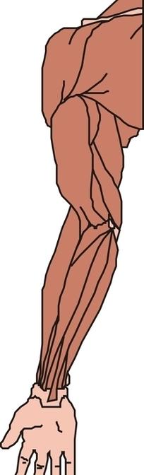 人体器官手绘