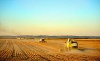 麦田机械化收割
