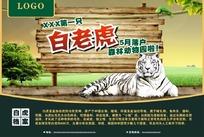 动物园白老虎DM单