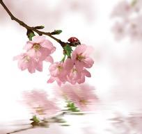 花卉插画水波上的一枝桃花