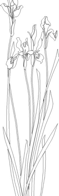 长方形山水手绘画线描