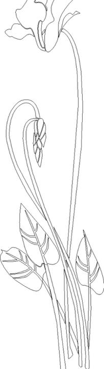 掌形叶子的开花植物线描图