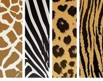 豹子斑马等动物皮毛背景