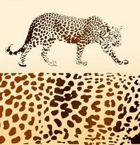 豹子和豹子皮底纹图案