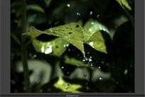 短片视频 下雨雨滴绿叶溅起的水珠