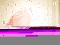 情人节视频  上升的水泡和金色幕布前朦胧的红玫瑰