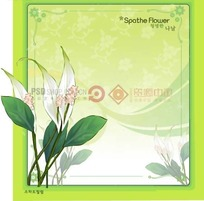 绿色背景上的绿色边框和佛焰苞花插画