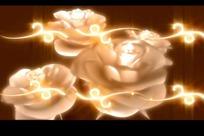 转动的白色玫瑰花