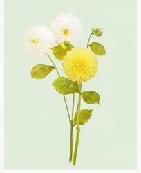 盛开的球形花朵插画psd分层素材