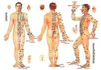 人体标准经穴部位挂图