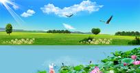 春季荷花美景背景