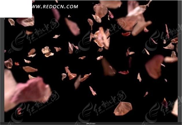 飘落的花瓣动态视频背景素材