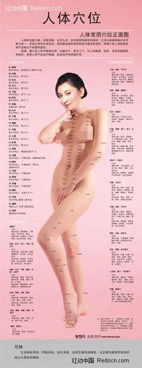 人体正面穴位图(裸体美女)