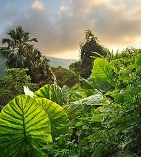 热带雨林中的小山峰