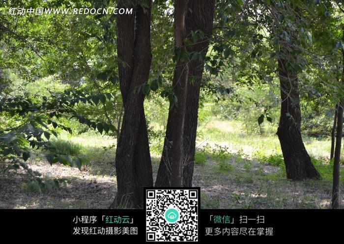 缠绕的树木图片