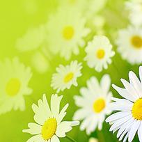 清新唯美花朵背景