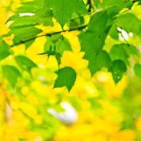 唯美绿叶图片
