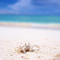 蓝天沙滩小螃蟹特写