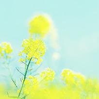 小清新花朵特写图片