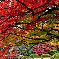红叶自然美景
