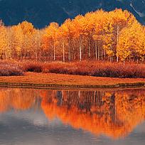 唯美的金色树林倒影
