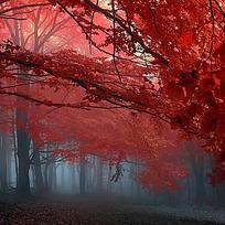 唯美红叶倒影主图