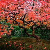 唯美红叶仙境图片