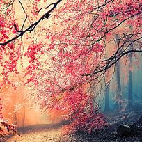 仙境般的红叶林