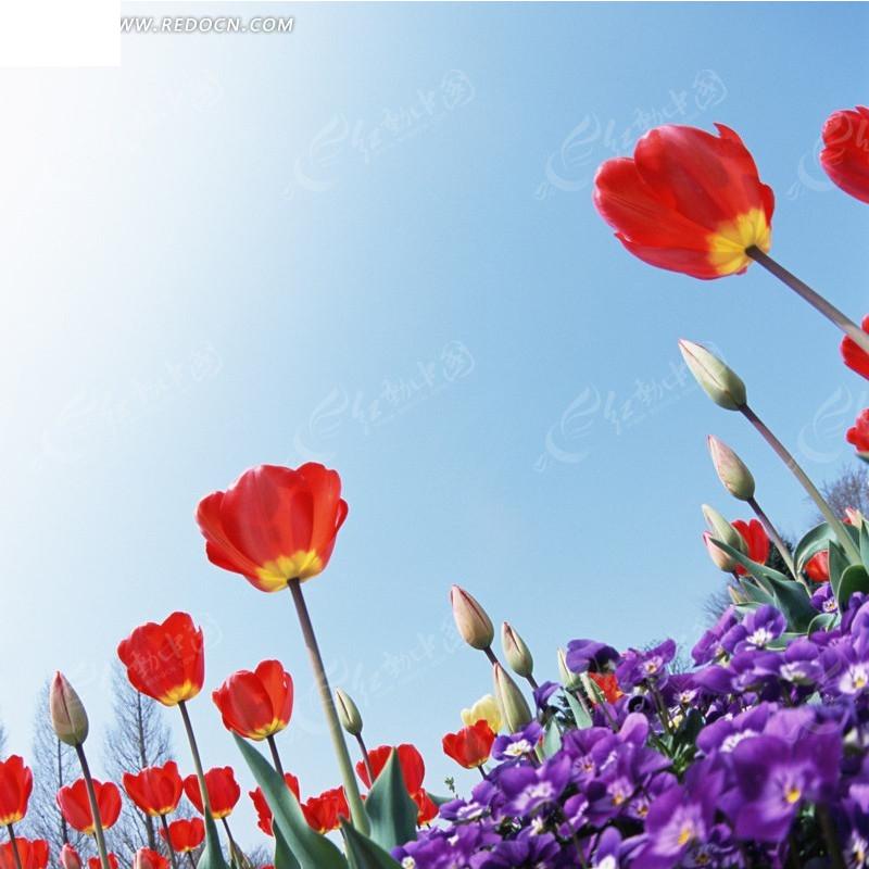 彩色花海淘宝主图背景