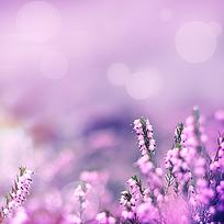 小清新花朵背景素材_