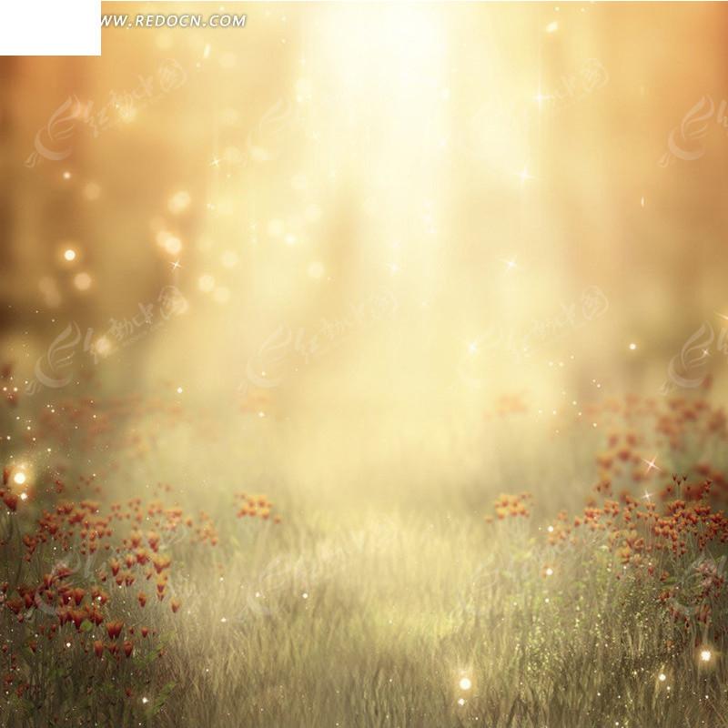 阳光下的草地淘宝主图背景