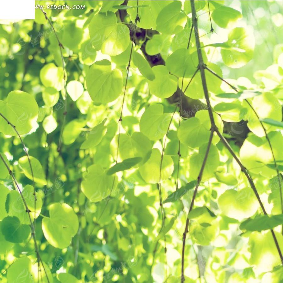 阳光下的树叶淘宝主图背景