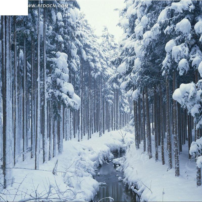冬天的树林和小溪淘宝主图背景