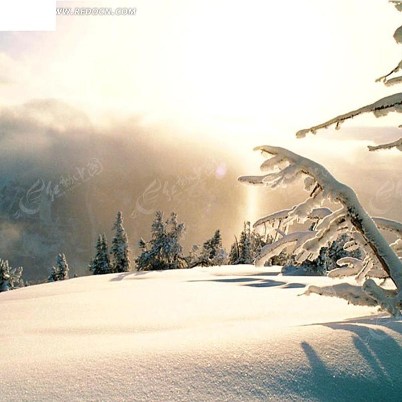 冬天阳光树林雪景淘宝主图背景