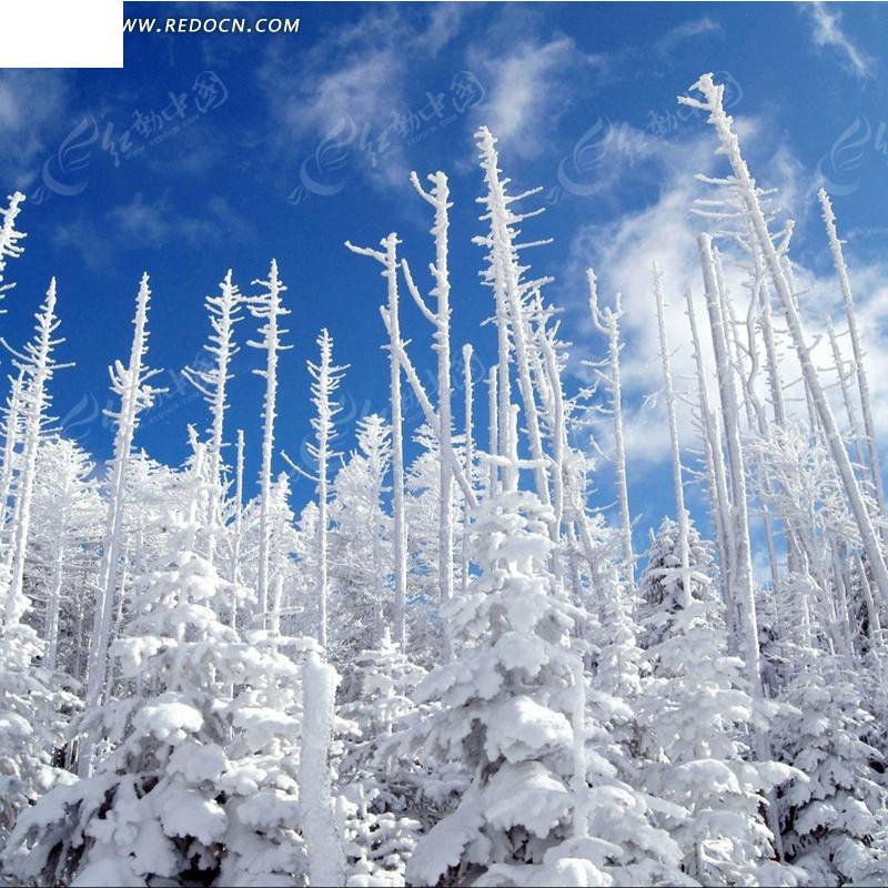 蓝天树林雪景淘宝主图背景图片